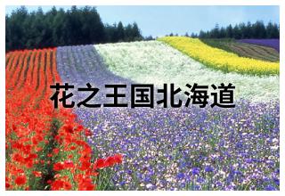 花之王国北海道 | 创意假日 | 活动指南